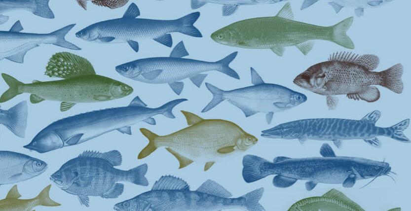 Музей Рыбы и Рыболовства подготовил новые мастер-классы на 13 и 14 апреля!