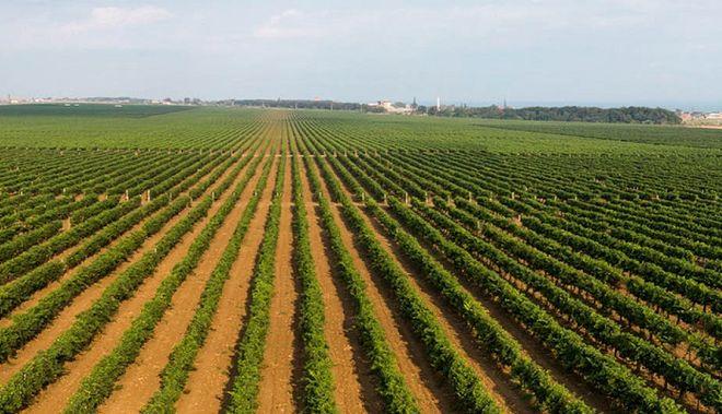 Кафе «Культурное» приглашает на дегустацию вин Усадьбы Перовских. 13 июня в 19:00 открываем для себя вина севастопольских виноделов